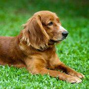 Pet-services-31-7-free-img.jpg